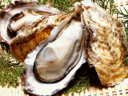 oyster_7
